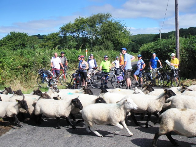 Sheep on Swiss Valley ride (18)